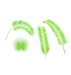 Set of colorful palm leaves vector image vector image