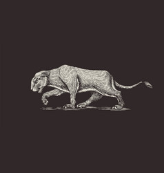 european cave lion panthera spelaea extinct vector image