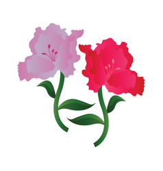 Lila and pink azalea flowers on white background vector