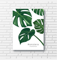 monstera green leave collections white frame vector image