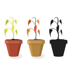 set dying home plants vector image