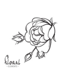 delicate rose on a white background vector image vector image
