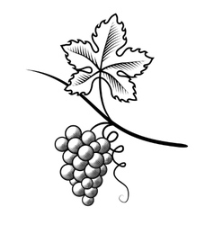 Grapes Imitation engraving vector image vector image