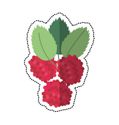 cartoon raspberry natural diet icon vector image