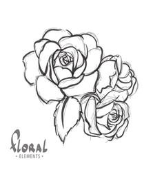 beautiful roses on a white background vector image