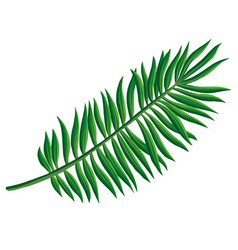 drawing tropical leaf vector image