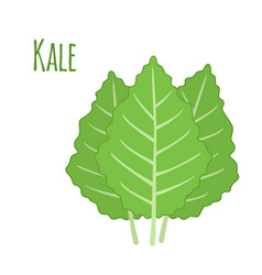kale vegetable in cartoon flat style organic vector image