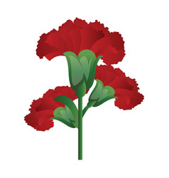 Red carnation flowers on white background vector