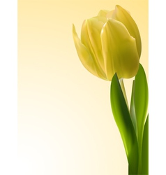 Yellow tulip vector