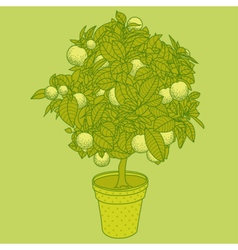 Citrus tangerine orange or lemon citrus tree vector image vector image