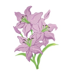 three purple lilies vector image