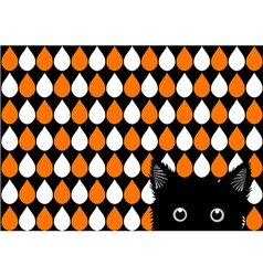 Black Cat Orange White Drops Background vector image