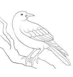 adult coloring bookpage a cute crow on the brunch vector image