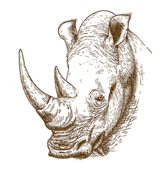 Engraving rhino vector