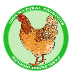 Brown broody chicken vector image