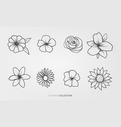 flowers and nature set vector image