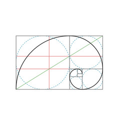 golden ratio design template vector image