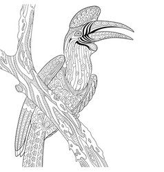 Hornbill bird adult coloring page vector