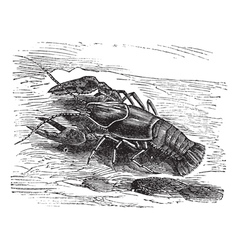 Lobster vintage engraving vector image