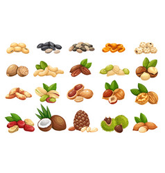 Nuts seeds and grains icons set vector