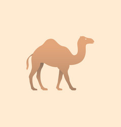 Brown camel vector
