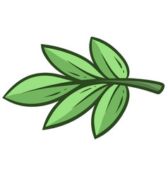 cartoon green branch and leaves eucalyptus vector image