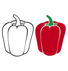 sweet red bell pepper vector image