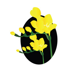 Yellow freesia flowers black circle on white vector
