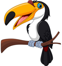 cartoon toucan bird isolated on white background vector image vector image