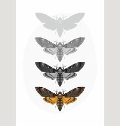 Butterfly Deaths head Hawk moth Set vector image