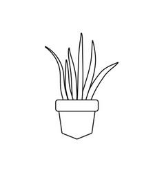 aloe vera in pot plants line style icon vector image