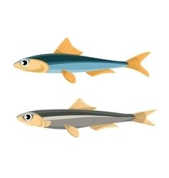 Anchovy Fish Peruvian vector