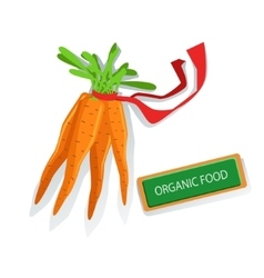 Bunch Of Carrots With Red Ribbon Fresh Organic vector