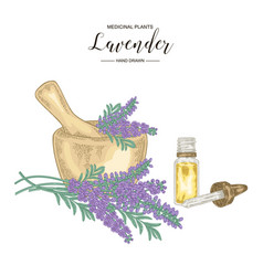 Lavender flowers with mortar and glass bottle of vector