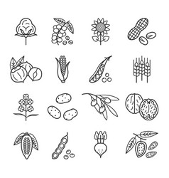 Agricultural commodities vegetable origin vector
