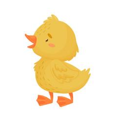Cute yellow duckling is standing vector