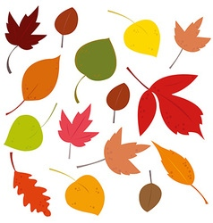 fallen leaves vector image