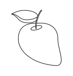 mango juicy fruit thin line vector image