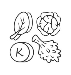 vitamin k linear icon edible greens and cabbage vector image