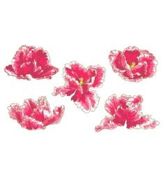 Set of 5 Tulip Flowers vector image vector image