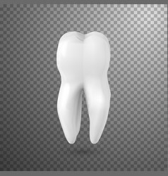 Tooth icon realistic teeth isolated on vector
