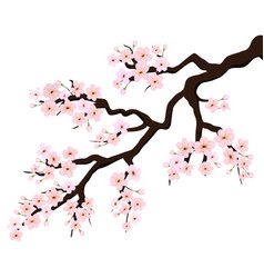 branch of sakura or cherry blossoms vector image vector image