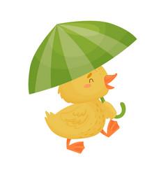 Cute yellow duckling under umbrella vector