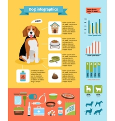 Dog infographics vector image