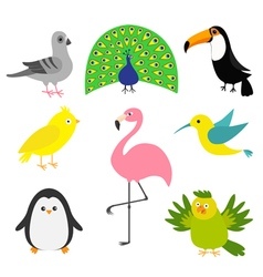 exotic bird set colibri canary parrot dove pigeon vector image