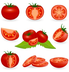 Icon set tomato vector