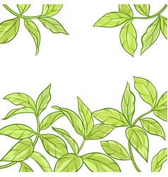 Tea leaves frame on white background vector