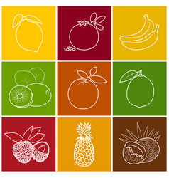 tropical fruit linear icons vector image