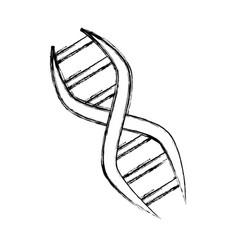 adn genetic code vector image vector image