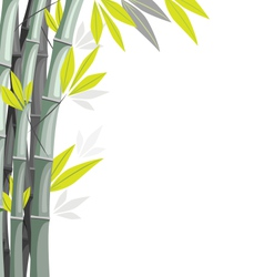 Bamboo isolated on white vector